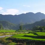 六安瓜片の効能や飲み方、歴史まとめ【中国緑茶】